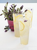 3 glasses of lavender lemonade, lavender flowers. Vodka, lemon juice, lavender syrup