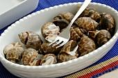 Sea snails (Thailand)