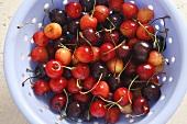 Sweet cherries in a colander