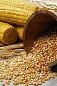 Corn kernels and cobs of corn
