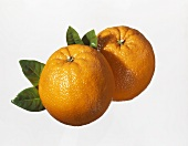 Two mandarin oranges with leaves