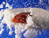 Rotbarbe in der Salzkruste