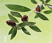 Olives with olive sprig