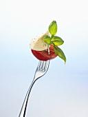 Mozzarella and tomato on a fork