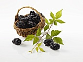 Blackberries in a little basket with a blackberry sprig next to it