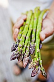 Hand Holding Fresh Asparagus Spears