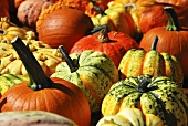 Various types of pumpkins (macro zoom)