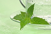 Peppermint tea in a glass cup (close up)
