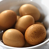 Fresh Brown Eggs from Iceberg Farms in New Jersey