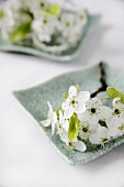 A Sprig of White Spring Flowers on a Green Plate