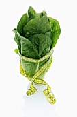 A cos lettuce with a tape measure