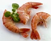 Three king prawns