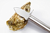 An oyster with oyster knife