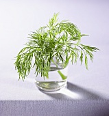 Sprig of dill in a glass of water