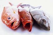 Three whole sea fish