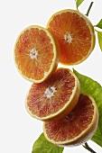 Halved blood oranges, variety 'Tarocco'