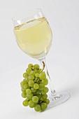 White wine grapes beside full white wine glass