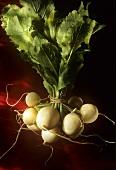 Bunch of Fresh White Turnips