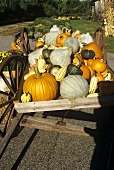 Autumn Wagon Full of Pumpkins and Squash