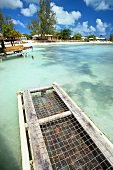 Lobster Trap in the Caribbean