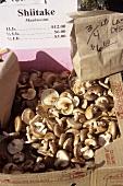 Fresh Shiitake Mushrooms at an Outdoor Market