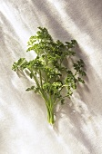 Curly Parsley on White; From Above