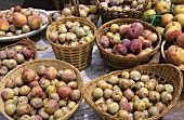 Many Baskets of Organic Plums