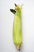 An unhusked corn cob