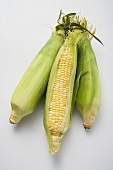 Three corn cobs with husks
