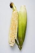 Two corn cobs with husks and silk