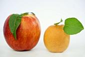 Eine Nektarine und eine Aprikose