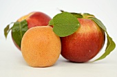 Two nectarines and one apricot