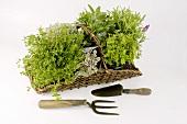 An assortment of herbs in a basket