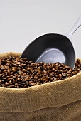 Roasted coffee beans and scoop in a jute sack