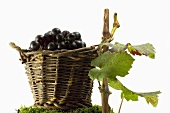 Red wine grapes in a basket