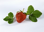 A strawberry with leaves