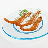 Three shrimps on a glass plate