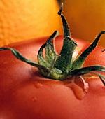 Tomato stalk