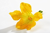 A courgette flower