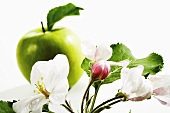 Apple blossom with apple in background