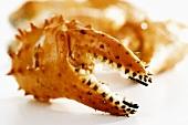 A crab claw