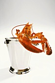 A lobster in a champagne cooler
