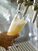 Pouring a glass of foaming draught wheat beer