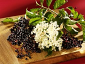 Fresh elderberries and elderflowers on a wooden board