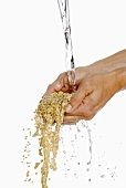 Someone holding two hands full of barley under running water