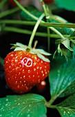 A strawberry (close-up)