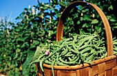 A basket full of green beans