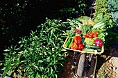 Eine Schubkarre voll Gemüse