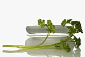 Curly parsley beside white dish