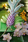 Bromelia, exotic fruit and orchid flowers